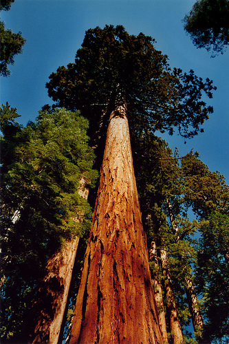 sequoia national park milf personals Yosemite national park offers  if you're into the big trees think about including more of the sequoia national park on  wawona is the home to dating from the .