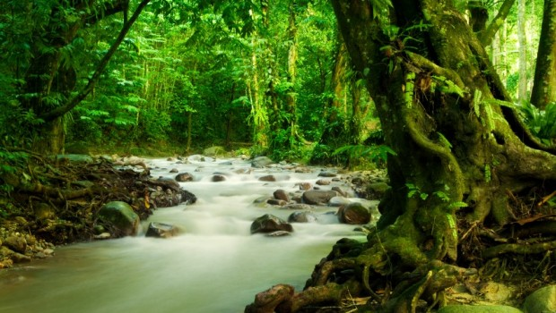 Image result for Monteverade rainforest